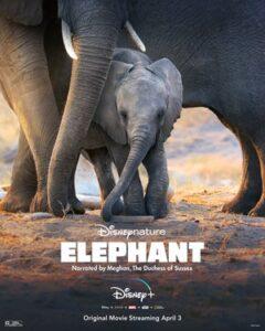 دانلود مستند Elephant 2020 فیل